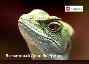 lizard-web